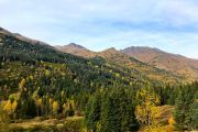 Fall forest and mountain views